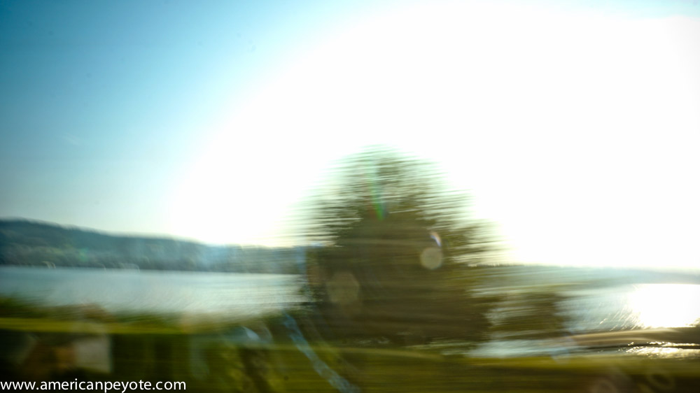 trainlandscapeswitzerland-06268