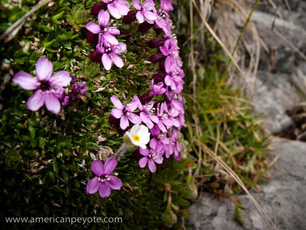 Flowers_Bokeh-1.jpg
